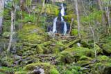 Fern Branch Falls 1