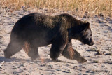 0001-Bear.jpg