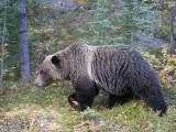 20120920_Alberta BC_1100.jpg