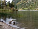 20120930_Alberta BC_0251.jpg