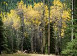 20121001_Alberta BC_0186.jpg