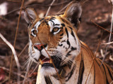 Pench National Park Gallery