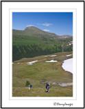 Rocky Mountain Alpine