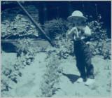 First Garden 1951