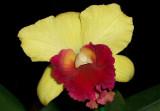 Jungle Jewel
