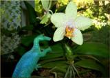 Orchidosaurus