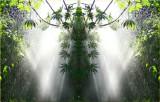Fatsia Sun Shower