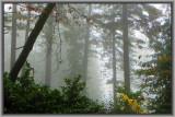 Rain Trees