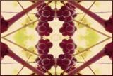 Grapesymetrics