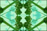 Grapesymetrics 2