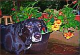 Amos the Gardener