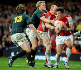 Wales v South Africa11.jpg