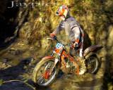 Cwm Woods10.jpg