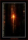YN6Y12872-copy-b.jpg