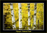 YN6Y23412-h-copy-b.jpg