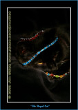 YN6Y44712-copy-b.jpg