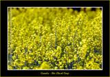 YN6Y00142-copy-b.jpg