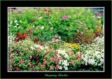 Alaska_2003_0142-copy-b.jpg