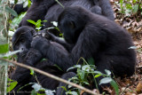 Bwindi Mountain Gorilla-710.jpg