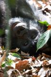 Bwindi Mountain Gorilla-728.jpg