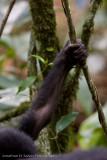 Bwindi Mountain Gorilla-790.jpg
