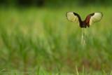 Amazon Peru-118.jpg