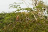 Amazon Peru-37.jpg