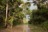 Amazon Peru-404.jpg