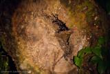 Danum Valley-_MG_7771.jpg
