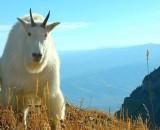 get off my mountain.jpg
