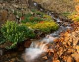 pure spring water.jpg