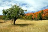 Battlecreek meadows.jpg
