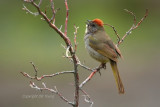 little mountain bird singing_filtered.jpg