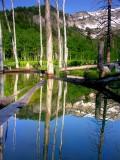 Dead tree reflection