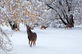 12 Foraging in the snow