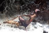 10 Turkey on the trail