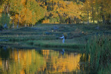 24 Trout fishing in a pond of gold