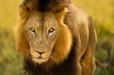 Afrique 2010