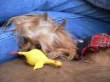 After dinner nap