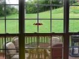 Watching the Hummingbirds