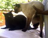 Guapimirim:  Bobby Marley e Colega Pupinho PIC03029.JPG