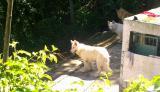 Guapimirim:  os Cachorros da Graça PIC03055.JPG