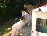 Guapimirim:  os Cachorros da Graça  PIC03056.JPG