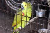 Der lachende Papagei  134.jpg
