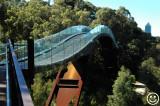 DSC_8705 Perth W.A. Botanic gardens tree top walkway and bridge.jpg