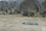 DSC_6379 Dead Horse Gap NSW.jpg