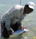 Christmas Island bonefish