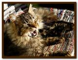 Tigger Sun Yawning.jpg