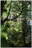 Lake Vyrnwy 1459