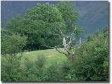 Wales051.jpg